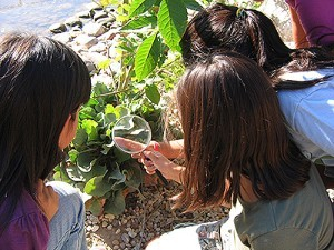 Students using Habitat